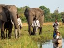 Experience rescued elephants and a safari by mokoro at Abu Camp (Abu Camp)