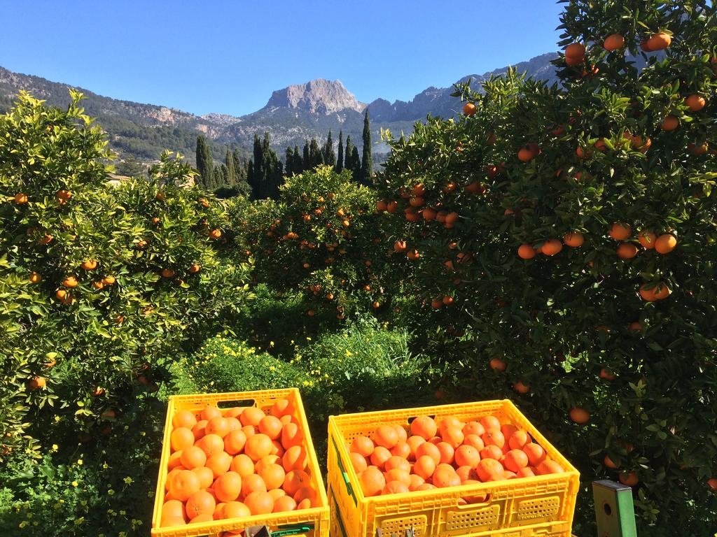 Mallorca - Orange Groves - Jumeirah Port Soller (Spain)